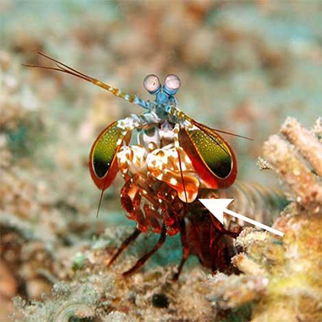 My inner shrimp essay